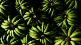 Alarm as Devastating Banana Fungus Reaches the Americas