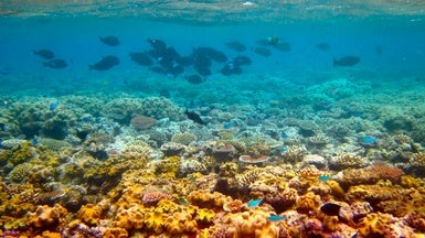 "Australia Boosts Spending to Keep Great Barrier Reef off ""in Danger"" List"