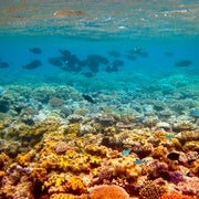 Australia Boosts Spending to Keep Great Barrier Reef off