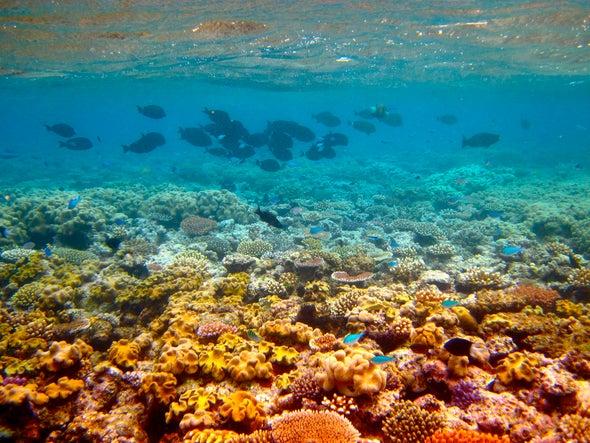 "Australia Boosts Spending to Keep Great Barrier Reef off ""in Danger"" List"