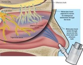 Nasal passage illustration