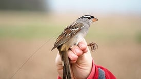 Migrating Birds May Be Collateral Damage for a Popular Pesticide