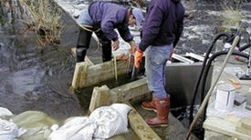 Upstream Battle: Fishes Shun Modern Dam Passages, Contributing to Population Declines