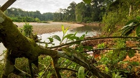 How Much of the World's Protected Land Is Actually Protected?