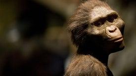 Creationism Invades Europe