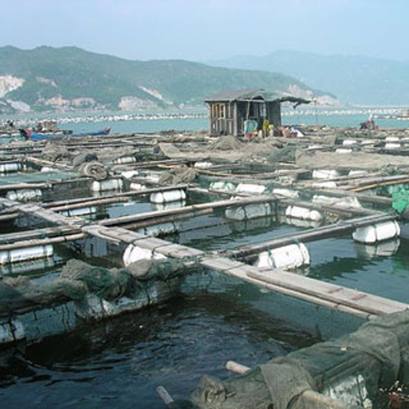 Aquaculture May Replace Wild Fish Stocks
