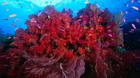 Seabird Poop Speeds Up Coral Growth