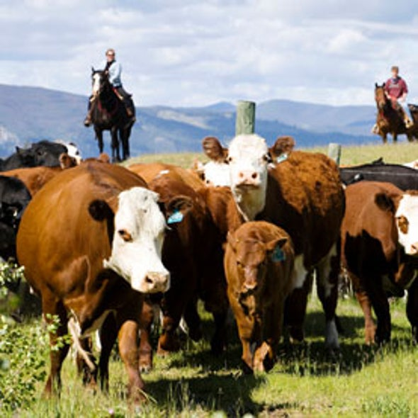 U.S. Ranchers Struggle to Adapt to Climate Change