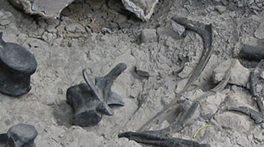 10 Places You May Catch Paleontologists Digging Up Fossils