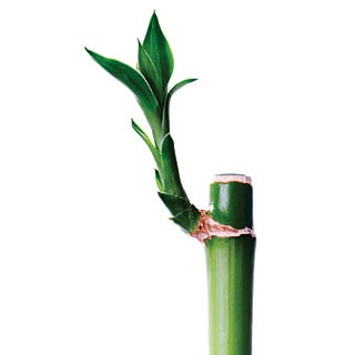 Bamboo Boom: Is This Material for You?