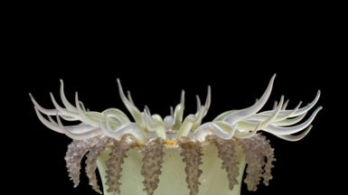 Stunning 19th-Century Glass Models Teach Scientists about the Ocean's Fragility [Slide Show]