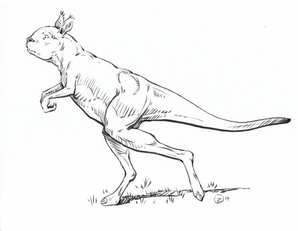 Primordial Giant Kangaroos Did Not Hop, They Walked