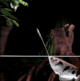 How Archer Fish Gun Down Prey from a Distance [Video]