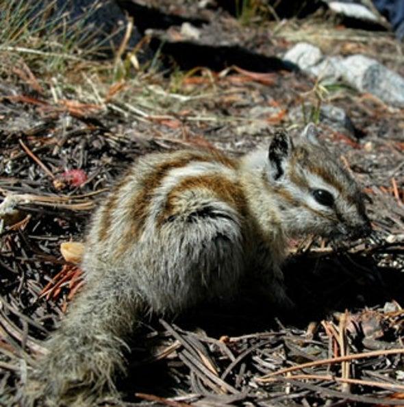 New Homes on the Range: Species Shift Across Yosemite