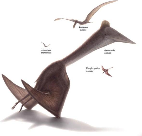 Giant Pterosaurs Serve as Aircraft Inspiration