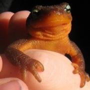 Some California Amphibians May Need a Lift to Survive Climate Change