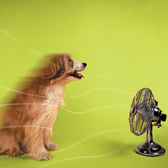 How to Keep Cool without Running Your AC