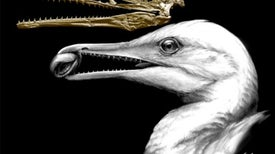 New Fossils Offer Clues about a Primordial Bird Beak