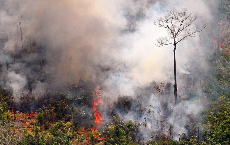 Why Amazon Trees Are Especially Vulnerable to This Year's Fires - Scientific American