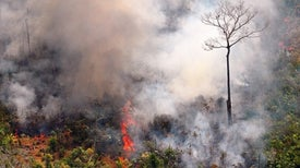Why Amazon Trees Are Especially Vulnerable to This Year's Fires