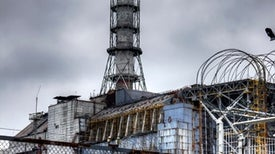 Chernobyl Wildlife Make a Comeback Despite Contamination