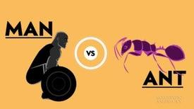 An Olympic Showdown: Human versus Ant