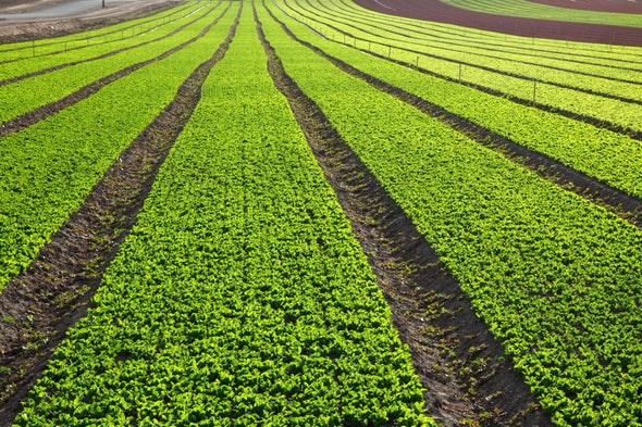 California Farms Are a Silent but Sizable Source of Air Pollution