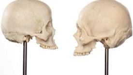 How Skulls Speak