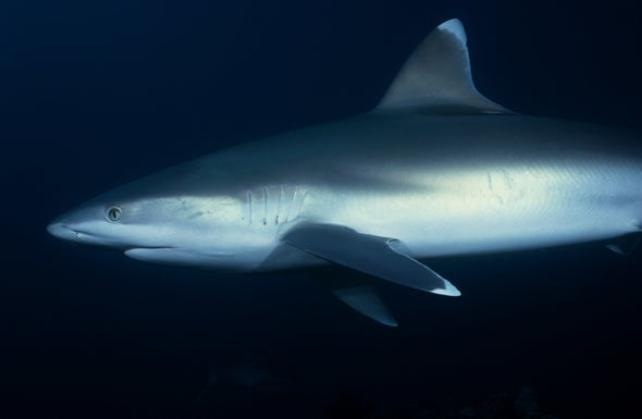 """Shark Fins Contain Toxic """"One–Two Punch"""""""