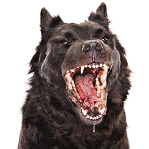 Experts Urge Mass Dog Vaccination to Eradicate Rabies
