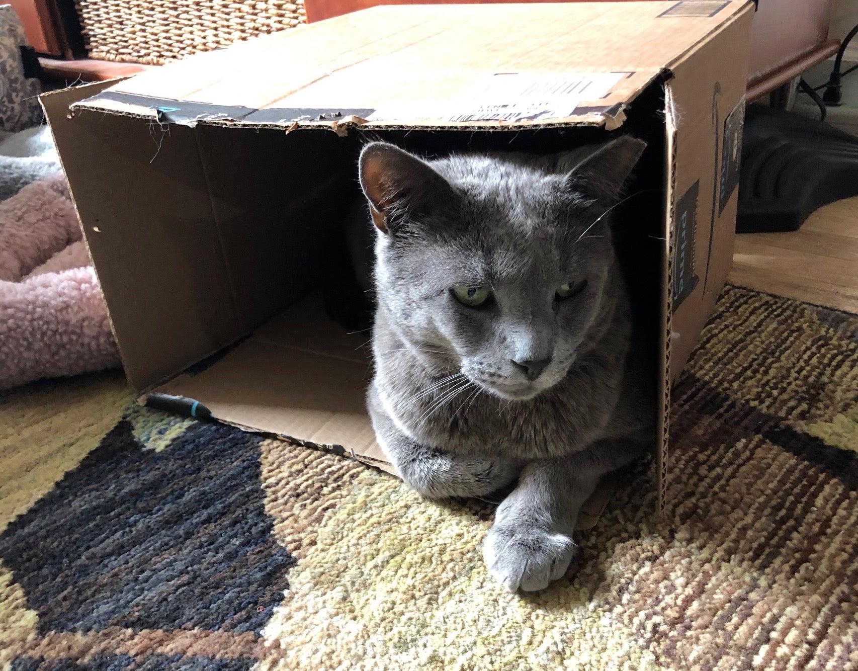 Coronavirus Can Infect Cats