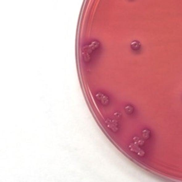 Bacteria Transformed into Biofuel Refineries
