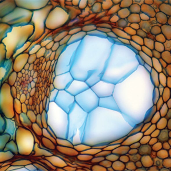 Small Wonders: Science Meets Art under the Lens [Slide Show]