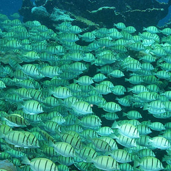 Slide Show: Larger Sea Life Depends on Healthy Reefs