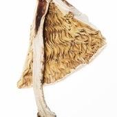 Amanita of Manicata