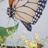 Milkweed Garden, Orlando, FL