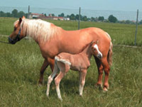 Mare Gives Birth to Own Clone