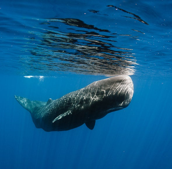Marine Life Needs Protection from Noise Pollution