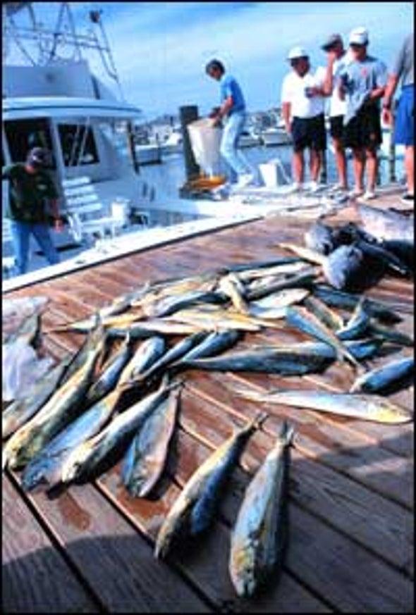 Ocean Fish Feeling Effects of Recreational Anglers