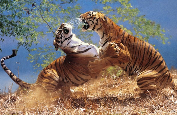 A Man-Eating Tiger, the Science of Athletic Recovery and Other New Science Books