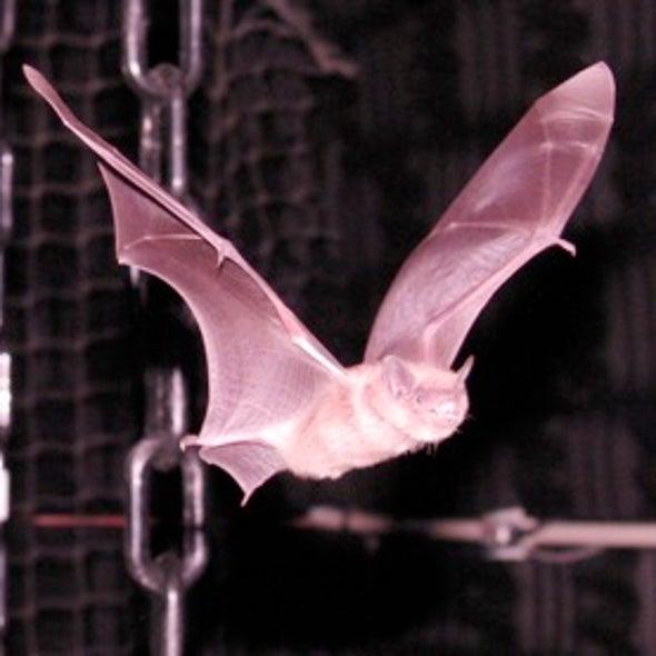 Sound Tracking: Harmonics Enable Bat to Focus on Prey Despite Noise