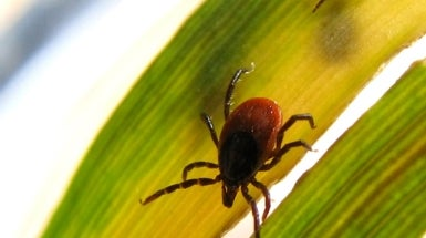 The Growing Global Battle against Blood-Sucking Ticks