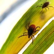 The Growing Global Battle against Blood-Sucking Ticks