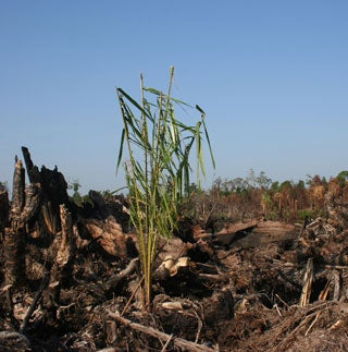 Biofuels Are Bad for Feeding People and Combating Climate Change