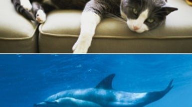 How Kitty Is Killing the Dolphins