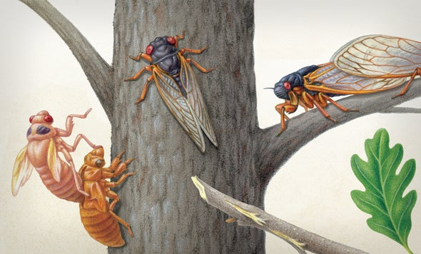 Brood X Cicadas Are Emerging at Last