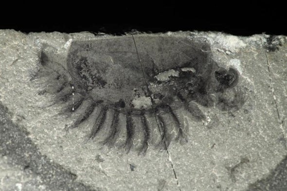 """""""Mother Lode"""" of Fossils Discovered in Canada"""