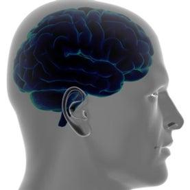 brain cells astrocytes