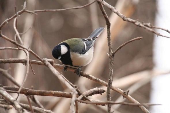 Bird Combines Calls in Specific Order