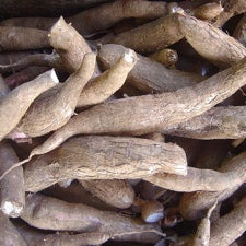 Breeding Cassava to